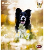 Kalender Border Collies